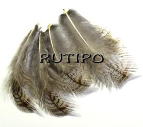 Перо фазана 2-5 см, шт