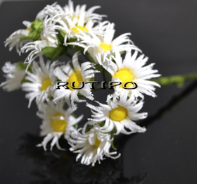Хризантемы белые 30мм, 1 цветок
