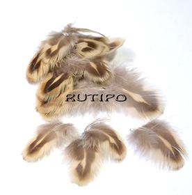 Pheasant feather 1-3cm, pcs