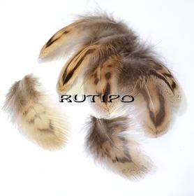 Pheasant feather 3-7cm, pcs