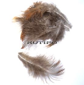 Pheasant feather 5-10cm, pcs