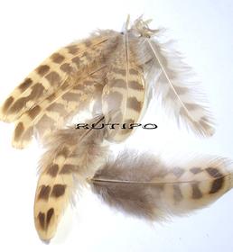 Pheasant feather 3-8 cm, pcs